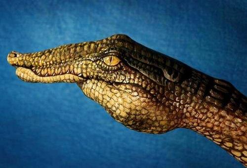 Crocodile_Guido Daniele